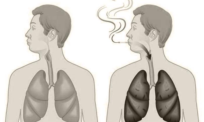 легкие некурящего человека и курящего